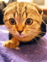 This Adorable Kitten Video Will Make Your Heart Explode #refinery29
