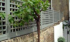 Painted Trellis Panels Wall Trellis, Trellis Panels, Trellis Fence, Lattice Fence, Garden Trellis, Privacy Fence Landscaping, Garden Privacy Screen, Garden Fence Panels, Garden Fences