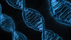 Research Sees Overlap in Altered Genes Found in Schizophrenia, Autism and Intellectual Disability. Chromatin remodeling genes are over-represented.