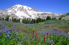 my favorite place to spend a July afternoon...alpine meadows on Mount Rainier
