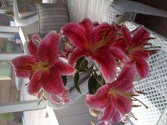 Stargazer Lillies - My flowers for my wedding!