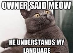 Really Funny Cats with Captions - Bing Images