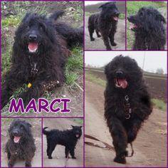 Kutya örökbefogadás - Hajdúszoboszlói Kutyabarátok Egyesület – Marci