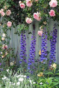 Purple Delphinium look great along a fence.