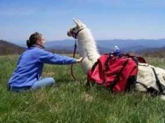 Smoky Mountain Llama Treks - Enjoy hiking spectacular, scenic trails in the Smoky Mountains - Llama Trekking with professionally-trained, friendly, fluffy pack-llamas! Llama Trekking is a fun, outdoor adventure for you and your family to enjoy and remember for years to come!