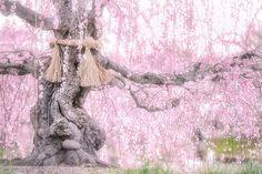 東京カメラ部さんはInstagramを利用しています:「ブースト、お気に入り大歓迎!katakonbuさんの投稿作品です。 【katakonbuさん】 https://tokyocameraclub.com/mstdn/katakonbu/ 【投稿作品】…」
