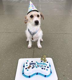 dog birthday cake!