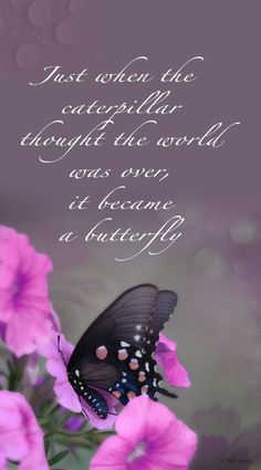 Butterfly.. Reminds me of a friend that did the butterfly project. She didn't pull through :'l