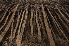 Les forêts mystérieuses d'Eva Jospin - Journal du Design