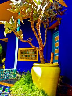 Marrakech Morocco - Majorelle Gardens - Entrance.  These colours just sing!