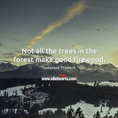 Not all the trees in the forest make good firewood. - Sudanese proverb