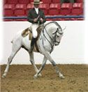 IALHA – International Andalusian & Lusitano Horse Association