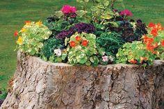 Use a tree stump as a flower pot.