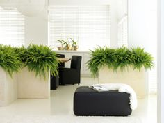 Benholm Group - office plants, fruit boxes and displays experts! The home of Quality, Reliable and Fresh Interior & Exterior Landscaping. Get a quote today! Cafe Interior, Office Interior Design, Office Interiors, Interior And Exterior, Indoor Office Plants, Indoor Plants, Indoor Gardening, Greenhouse Cafe, Workspace Design