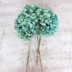 Imagine yourself carrying a bouquet of these gorgeous blue preserved hydrangeas down the wedding aisle. They will be perfect to create that rustic or vintage look you dream of. Then enjoy these teal b                                                                                                                                                                                 More
