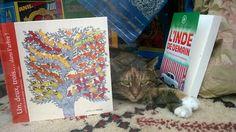 Le chat de l'Orange Bleue... L'Inde est à l'honneur en ce moment à la Librairie...