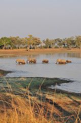South Luangwa National Park . Zambia
