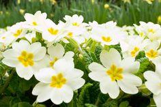 imagenes de flores blancas hermosas para computadora