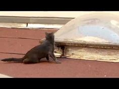 Maya Ze Cat : Action