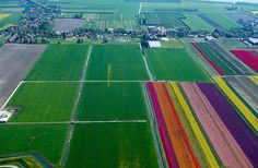An Aerial Tour of Tulip Fields in the NetherlandsNormann Szkop