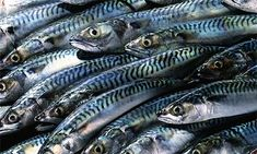 One-third of fish caught in the English Channel have plastic contamination, study shows.  Fish were found to contain small pieces of plastic known as 'microbeads', in a study of 10 species.    So put your plastic in recycling