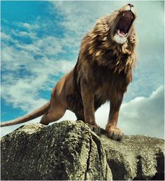 Aslan the Lion - Mery J Kendy Lion Images, Lion Pictures, Lion Wallpaper, Animal Wallpaper, Aslan Narnia, Lion Photography, Lion Love, Tribe Of Judah, Le Roi Lion