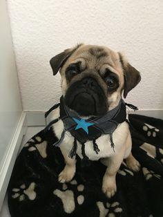 My lovely pug!