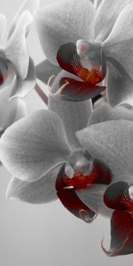 www.orchids.com/