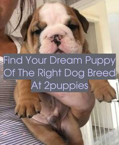 English Bulldog Puppy for Sale Bulldog Puppies For Sale, English Bulldog Puppies ... See more. Bulldog pup! This will absolutely be the first dog I ge...