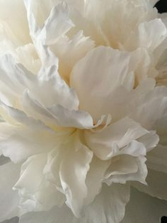 peony Source by simonekannenwis Art Floral, Deco Floral, My Flower, Flower Art, Flower Power, Pretty Flowers, White Flowers, White Peonies, Shades Of White