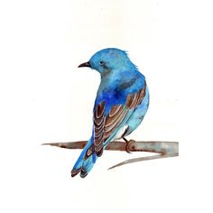 Bluebird Painting ART  Archival print of watercolor painting A4 print