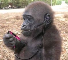 Monkey Listening to Ipod - photos to stimulate conversation using action verbs - -  Pinned by @PediaStaff – Please Visit http://ht.ly/63sNt for all our pediatric therapy pins