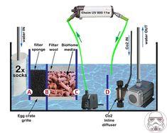 Image result for planted sump design Aquarium Sump, Saltwater Aquarium, Aquarium Fish, Fish Tank, Aquariums, Plants, Google, Design, Image