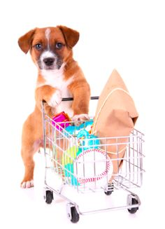Dog pushing a shooping cart - Shopping for doggy toys- very funny and quirky