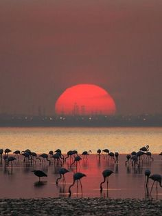 .this looks like Dubai....they have flamingos there and that looks like the city in the background..... #dubai #uae