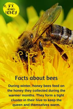 Facts about bees Honey Bee Facts, Bee Safe, Beekeeping For Beginners, Buzz Bee, Bee Do, Bees And Wasps, Bee Friendly, Animal Facts, Honey Bees