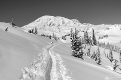 Steve G. Bisig Photography posted a photo: A black and white landscape photograph of a snow-covered trail captured on a sunny winter day in the Paradise area of Mount Rainier National Park, Washington. Mount Rainier National Park, Black And White Landscape, Winter Day, Landscape Photographers, Pacific Northwest, Trail, National Parks, Washington, Paradise