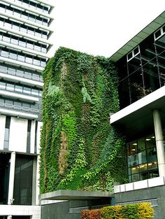 """PingMag - The Tokyo-based magazine about """"Design and Making Things"""" » Archive » Vertical Garden: The art of organic architecture"""