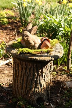 Beautiful Tree Stump Planter Ideas for the Garden - All For Herbs And Plants Tree Stump Decor, Tree Stump Planter, Tree Stumps, Tree Logs, Garden Yard Ideas, Garden Projects, Tree Garden, Wood Stumps, Tree Trunks