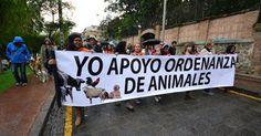 Apoyemos la ordenanza de protección animal en Ecuador! FIRMA Y COMPARTE ESTA PETICIÓN AHORA!