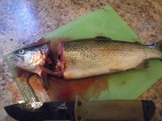 How to clean a trout (definitely a good skill to know) - http://SurvivalistDaily.com/how-to-clean-a-trout/ #fishing #survivalfishing #wildernesshunting