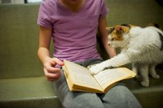 Very Adorable Pictures of Kids Reading to Homeless Cats / Jenny Xie + The Atlantic Cities | #socialreading