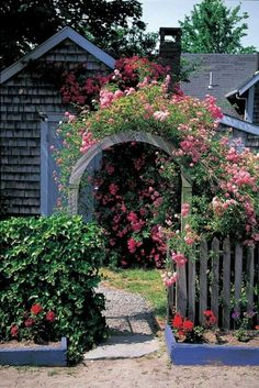 Nantucket Rose covered arbor and walkway