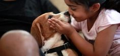 For #Beagles rescued in #Bangalore, #CUPA organizes adoption drive
