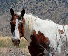 ...horse   Flickr - Photo Sharing!