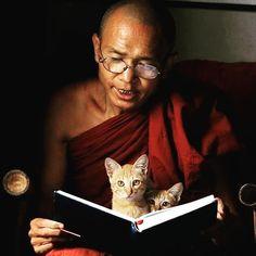 Respect all living beings  Follow: @odonocuida . . #cat #catsofinstagram #cats #catstagram #instacat #catlover #catoftheday #ilovemycat #catlovers #catsagram #lovecats #instagramcats #cats_of_instagram #instacats #cutecat #catlife #ilovecats #catofinstagram #gato #gatos #cutecats #catsofinsta  #petstagram #instapets #cutepets #portugal #buddhism