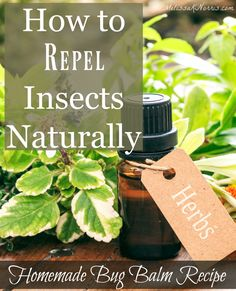 Natural Remedies and Recipes to Repel Bugs | Melissa K. Norris