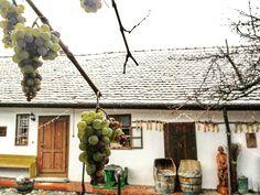 Möllmann Eszter Az első hóesés és a szőlő találkozása (Mór) Több kép Esztertől: https://www.instagram.com/mollmanneszti/