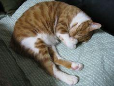 優しい猫 茶太郎