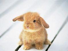 Love!! bunnies